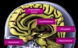 Gehirnforschung: Burnout und Depression3