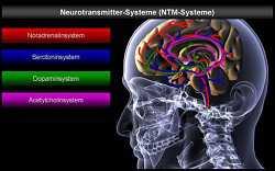 Beitrag Gehirnforschung: Ziele erreichen3 - Blog: gbcc, K. Ghaffari