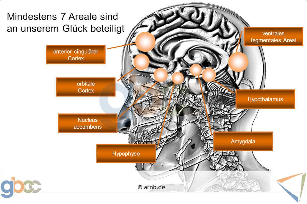 Glück: 7 Gehirnareale sind beteiligt