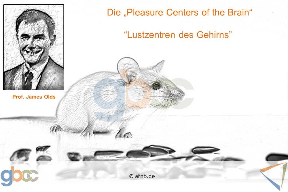 Glück: Lustzentren des Gehirns