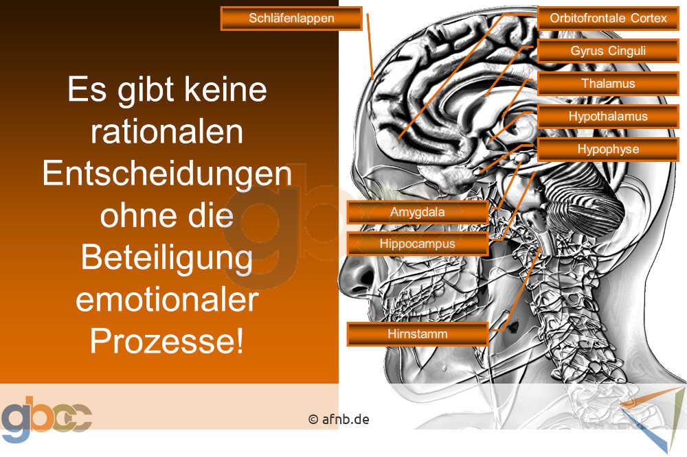 Neuromarketing-I-3