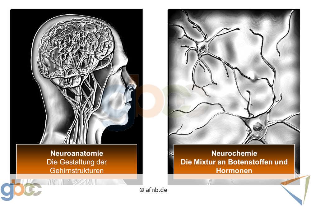 Neuromarketing_II_6