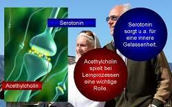 Kurzerläuterung zu Seratonin und Acethylcholin