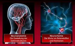 Gehirn und Neuronen