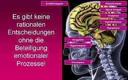 Gehirnforschung: Neuromarketing-I-3