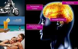 Gehirnforschung: Neuromarketing-I-5