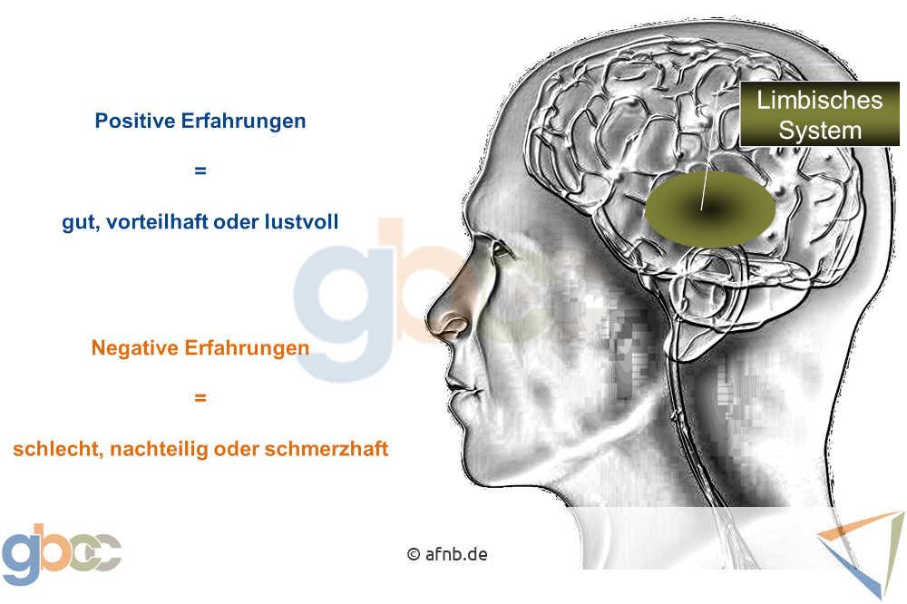 Aus- und Weiterbildung - Wie unser Gehirn lernt 2