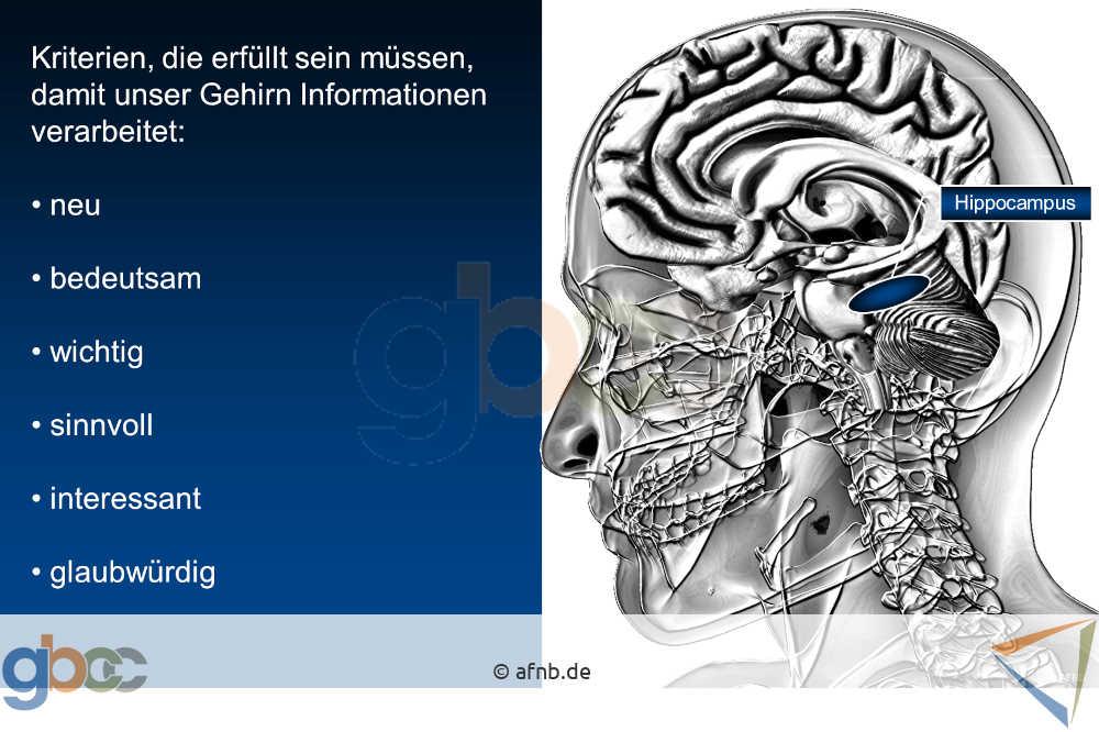 Aus- und Weiterbildung - Wie unser Gehirn lernt 5