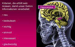 Hippocampus visualisiert