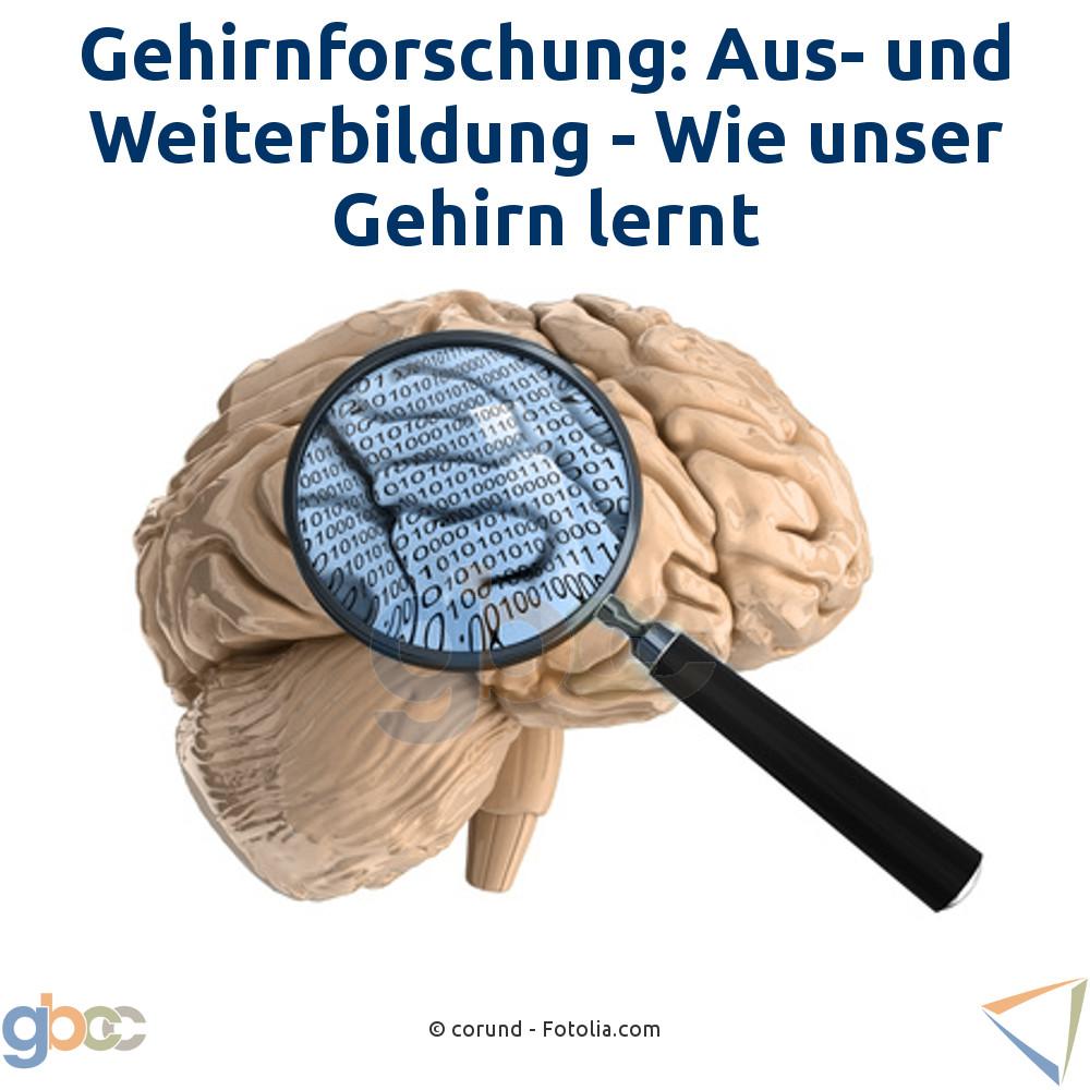 Gehirnforschung: Aus- und Weiterbildung - Wie unser Gehirn lernt