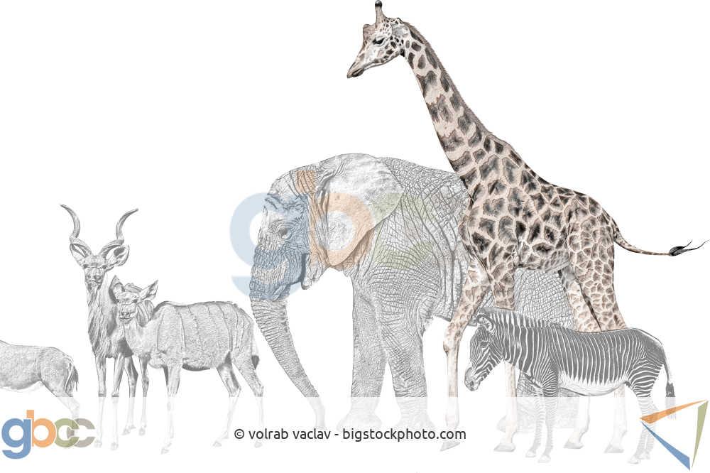 Tiere mit Giraffe