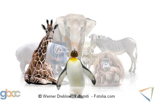 Tiere Sammlung. Giraffe und Pinguin hervorgehoben